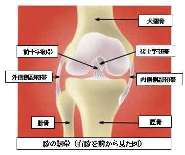>PCL損傷(後十字靭帯損傷)